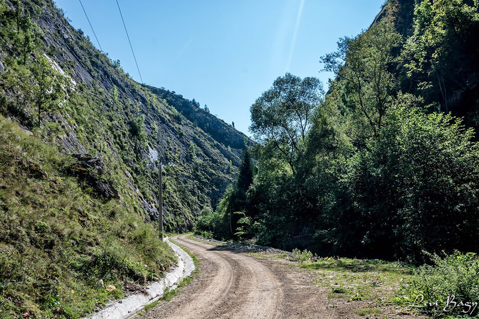 Cheile Runcului forestier - Levi Bagy Photography
