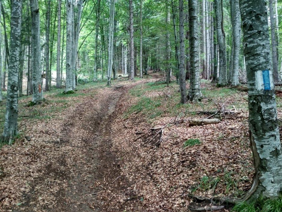 21mn img 29ba drumul forestier spre lacul sfanta ana